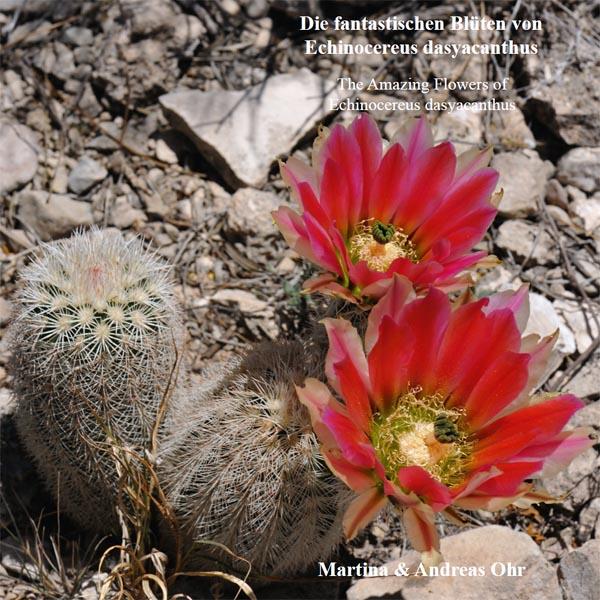 Die fantastischen Blüten von Echinocereus dasyacanthus