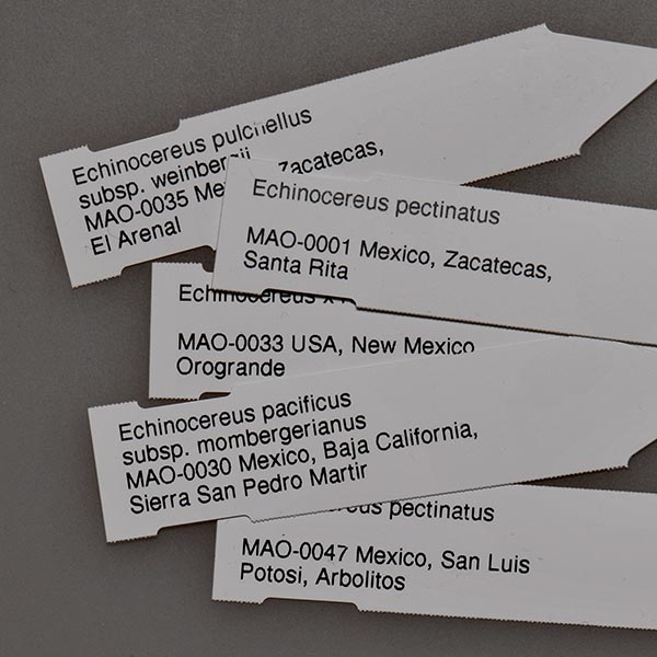 Plant labels 8x1.7 cm, MAO-0252, 100 pieces