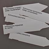 Etiketten Echinocereus viridiflorus corellii, 10 Stück