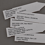 Plant labels 8x1.7 cm, MAO-0470, 10 pieces
