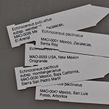 Plant labels 8x1.7 cm, MAO-0377, 10 pieces